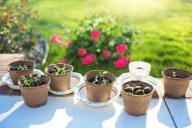Jardinage : semis
